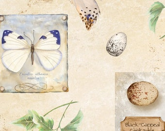 Botanical Butterfly, Bird walk - Nature Study by Nancy Mink for Wilmington Prints Fabric - 33822 174 Cream - Priced by the half yard