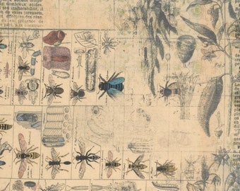 Entomology Eclectic Elements - Bug Fabric - Tim Holtz Free Spirit Fabrics PWTH027 - Priced by the Half yard