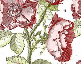 Tea Rose Fabric, Hatters Tea Party, Antique Rose - by Janet Wecker Frisch - Quilting Treasures 26150 Pink - end of bolt 24-inch