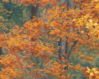 Autumn Forest - Landscape - Golden Leaves - On Golden Pond by Darrell Bush for Northcott DP22986 34 - priced by the half yard