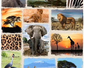 African Animals - Lion Fabric - African Savannah - Wild Kingdom -  Hoffman Fabrics - Q4492H-565 - Digital Fabric  - 24-Inch Panel
