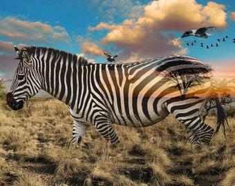 Zebra Fabric - African Savannah - Wild Kingdom -  Hoffman Fabrics - 4611 163 - Digital Print Fabric  - Priced by the 28-Inch Panel