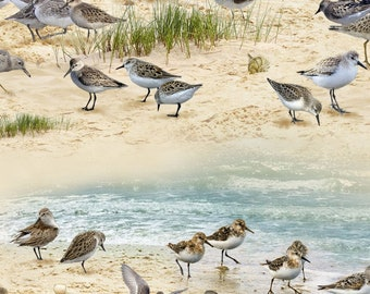 Sandpipers on the Beach - Coastal Dreams by Alan Giana for  Elizabeth's Studio Fabrics 593 Sand -  Priced by the 1/2 yard
