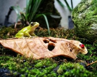 A Frog and A Ladybug on Fallen Leaf Fairy Garden Terrarium Accessories Miniature Woodland Accessory Decoration