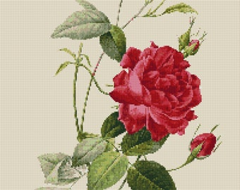 Flower Counted Cross Stitch Pattern Rose by Pierre Joseph Redoute