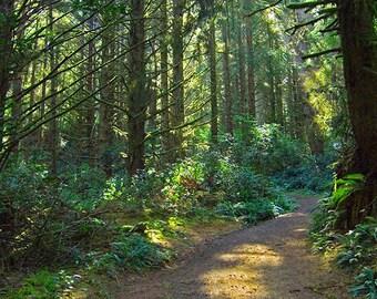 Oregon Forest, Landscape Photography, Hiking Oregon, Nature Photography, Forest view, Oregon Coastline, Pine Trees, Woods