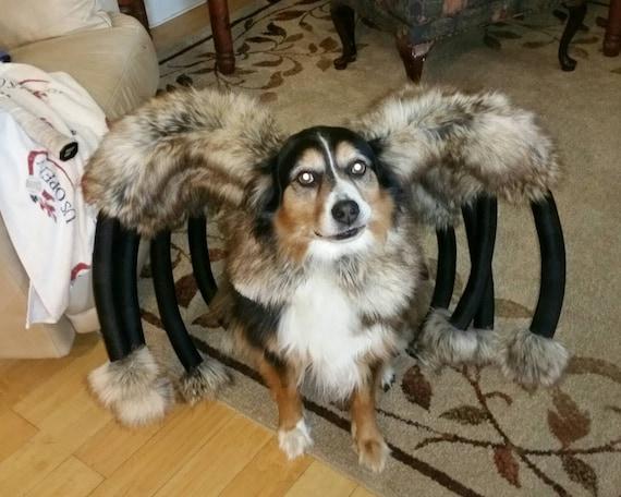 & Giant Mutant Spider Dog Costume