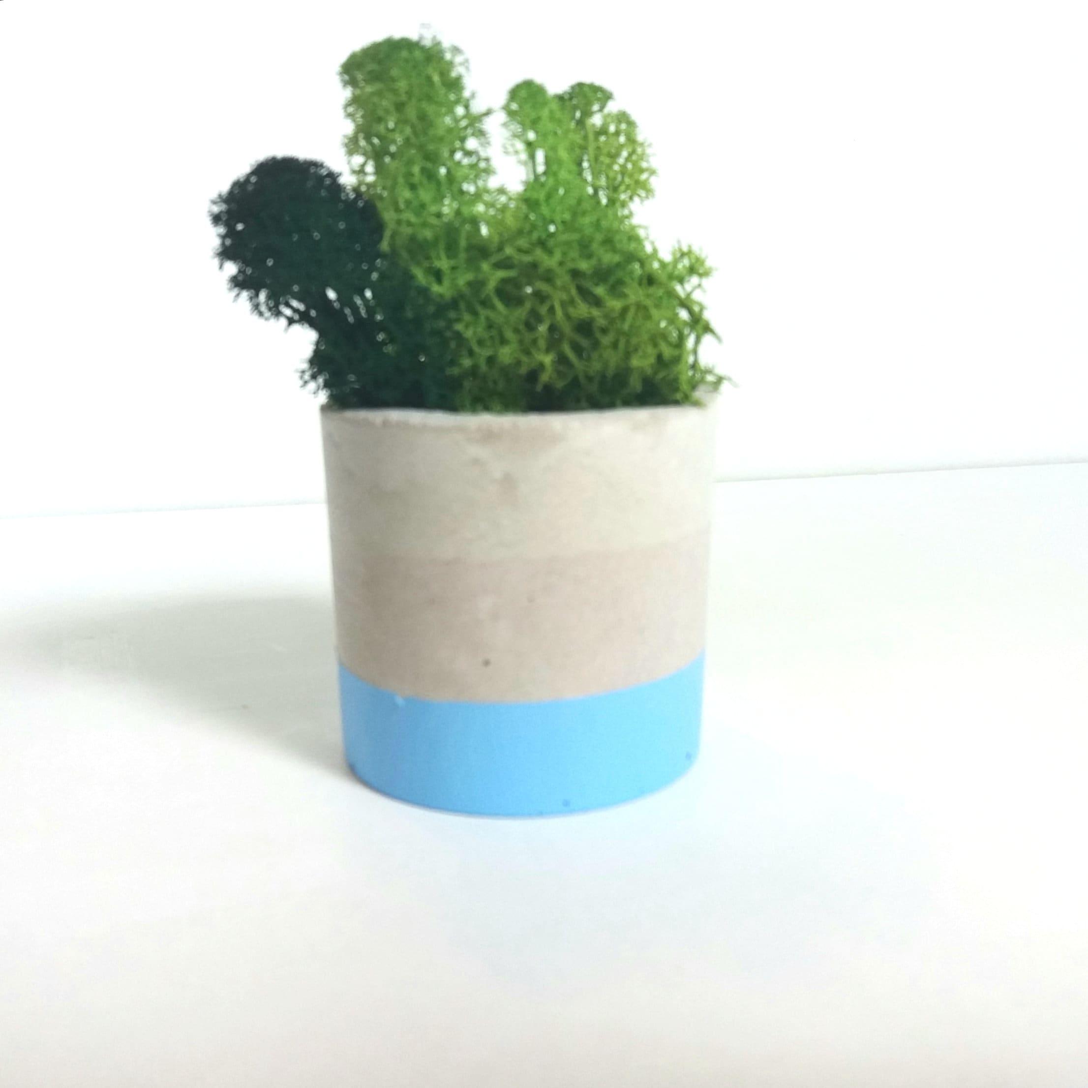 beton topf/beton luftpflanze halter/beton pflanzer / saftig | etsy