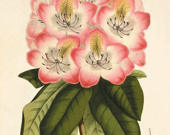 Oude Botanische Prenten : Gele orchidee kunst print botanische kunst wordt afgedrukt etsy