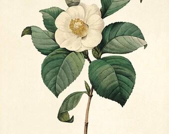 Oude Botanische Prenten : Botanische kunst print etsy