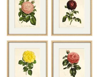 Antique rose art Print set antique prints botanical prints flower wall art Victorian rose French prints old print garden wall art rose print