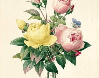 Rose art print poster antique prints Botanical Art Prints Home Decor Wall Victorian art Garden Wall Art flower art print botanical print