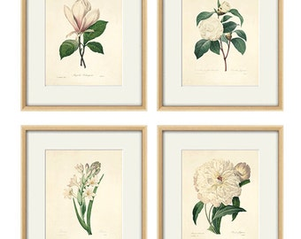 White botanical prints vintage flower art Cottage wall art Victorian print French wall art antique wall art Flower print Garden art print