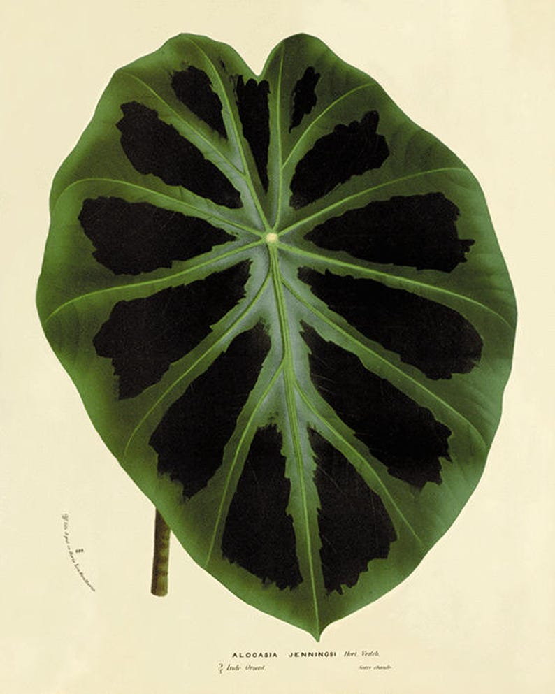 Antique leafs art print botanical art prints Vintage garden wall art home decor wall art antique wall art Victorian art plant art Nature art