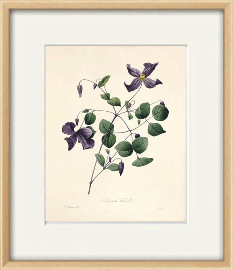 Violet flowers print poster antique print Botanical Art Print Home Decor Wall Victorian art Garden Wall Art flower art print botanical print