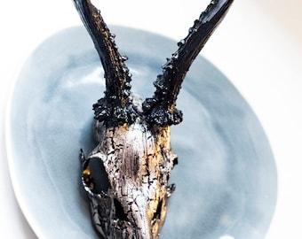 Geweih Okkult Knochen Skull Rotwild Hirsch Reh