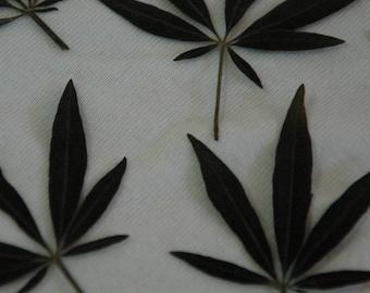 Dried Pressed Leaves / Botanicals. Small Vitex leaves.