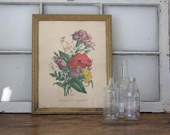 Framed Botanical Print, Vintage Botanical Print, Antique Wall Decor, Antique Print, Red, Purple, and Yellow Botanical Print Wall Hanging