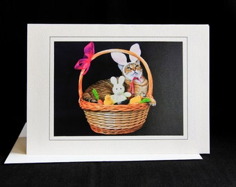 Easter Cat Card- Cat in Easter Basket- Cat with Bunny Ears- Blank Photography Cat Greeting Card- Gift Card for Cat Lovers- Dress Up Cat- HO1