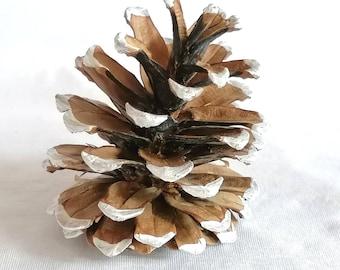 5 snow pine apples
