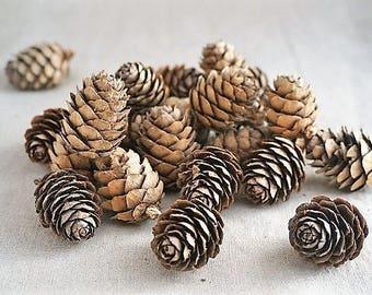 25 small pine cones