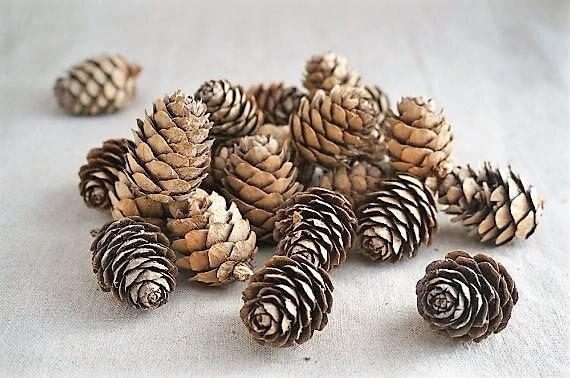 pequeñas pinas