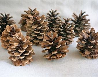 10 large pine cones
