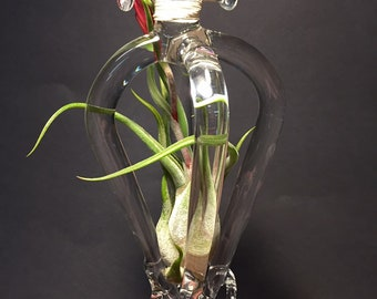 Clear blown glass air plant terrarium 6.5 x 2.5 x 3.25.    Plant is included but may not be in bloom at time of purchase.