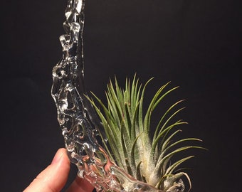 Hanging, clear glass, knitted, nest terrarium 7.5 x 2.5 x 3.   Air plant included