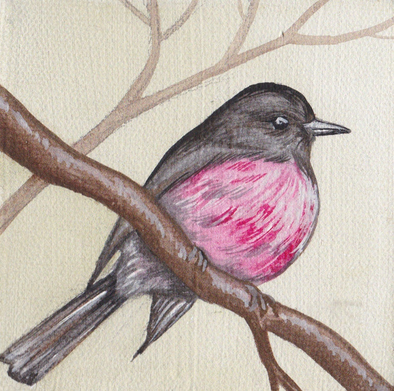 Miniature Canvas Watercolour on Canvas Pink Robin on image 0