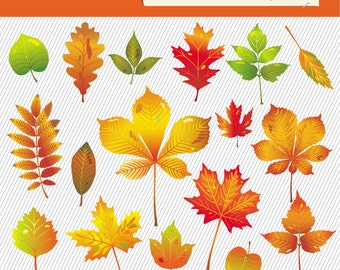 Autumn Leaves Clipart. Fall Tree Leaves Illustration. Natural Digital Images. 106