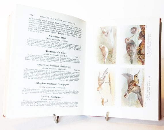 BIRDS of the BRITISH ISLES CD 27 Old Rare Antiquarian Bird Books Collection