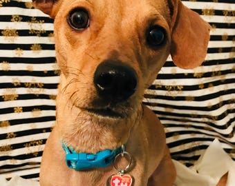 5a3d8cb0bc9 TY Beanie Baby Heart Tag - Cute Dog   Pet Collar Tag or Necklace Pendant  for Humans!