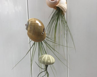 3 Air Plant Jellies (picked at random)