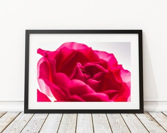 Flower Art, Extra large wall art - Romantic Gift for her - Raspberry Red Rose Extra large red art print - red rose - very large art -