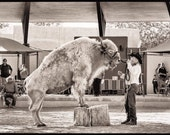White Buffalo, New Mexico Expo (State Fair), 2012, Platinum-Palladium Print