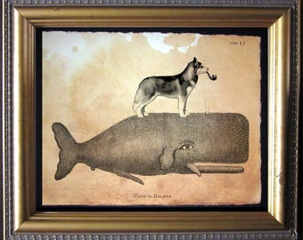 Siberian Husky Riding Whale - Vintage Collage Art Print on Tea Stained Paper -  dog art - dog gifts -- father's day gift- graduation gift