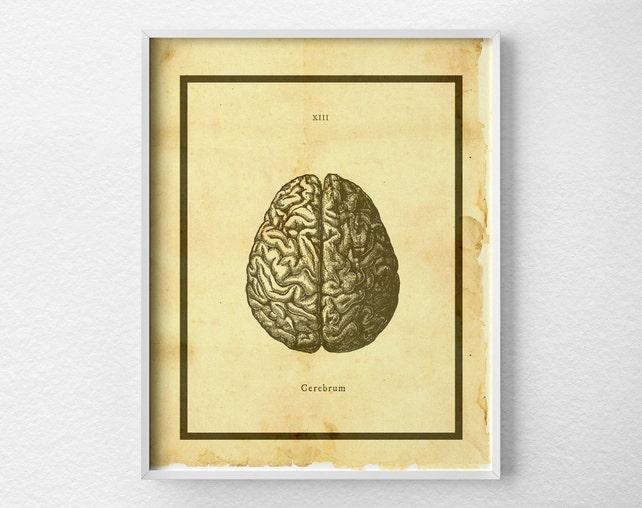 Anatomische Gehirn drucken Gehirn-Anatomie-Kunstdruck   Etsy