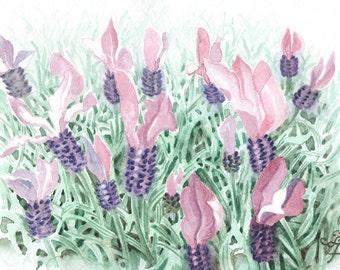 Lavender in Watercolour, Purple Flower Painting