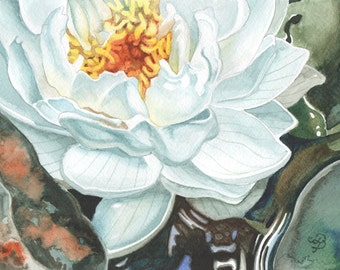 Water Lily in Watercolour, Flower Painting