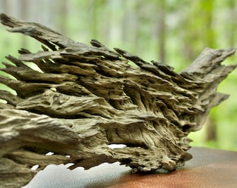 Dragon's Breath Southern Live Oak Heartwood Sculpture