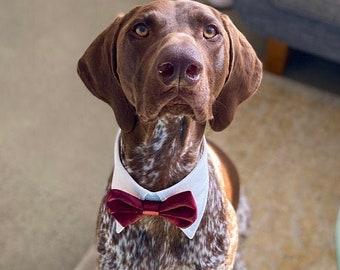 Burgundy dog bow tie collar, dog tuxedo collar, burgundy dog bowtie, dark red dog formal collar, pet bow tie, pet / dog wedding bow tie