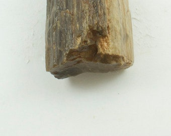 "Petrified Wood, Texas, 21g, Fossilized Wood,  1.5 x 1 x 1 "" (37 x 25  x 25mm)"