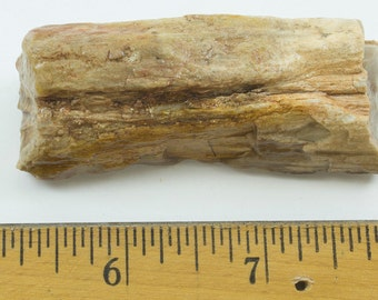 "Petrified Wood, Texas, 58g, Fossilized Wood,  2.5 x 1 x 1 "" (60 x 25  x 25mm)"