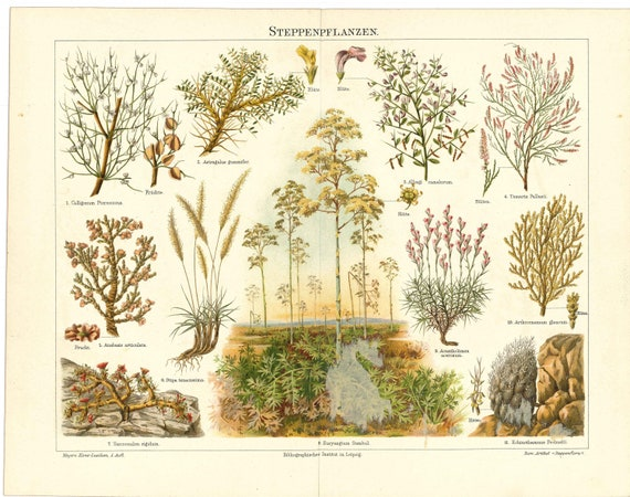 HOUSEPLANT PRINT Antique Lithograph from 1897