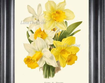 Bundles Yellow Daffodils Canvas Picture Wall Deco