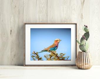 Bird Print, Bird Photography, Wildlife Photography, Nature Photography, Bird Art, Bird Gift, Bird Home Decor, Fine Art Print. Bird Wall Art