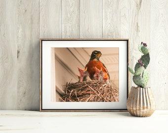 Bird Print, Bird Photography, Red Robin, Wildlife Photography, Nature Photography, Bird Home Decor, Baby Decor, Fine Art Print, Bird Art