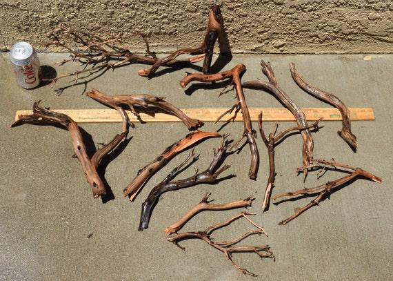 manzanita driftwood nano group 13 pieces moss plant aquarium etsy
