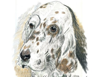 PRINT - ENGLISH SETTER; head study, wall art, drawing, 8 x 10 inches,